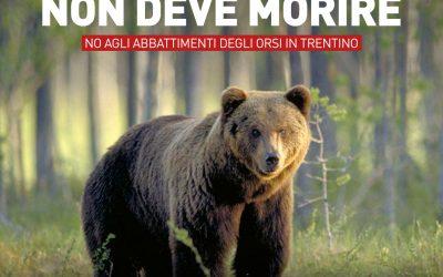 L'orsa JJ4 non deve morire!
